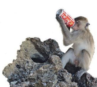 Die Makaken am Monkey Beach nehmen den Touristen alles weg, was nicht niet- und nagelfest ist.